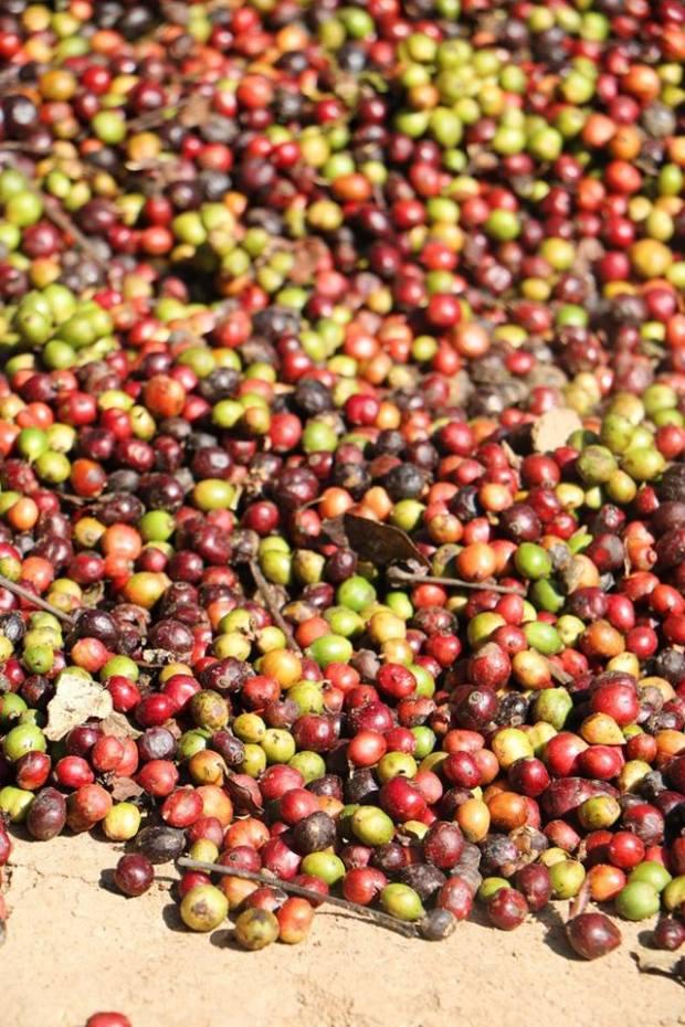 Caffe_India