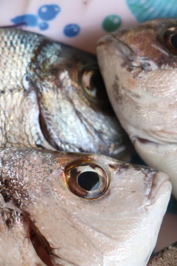 Pesce fresco sicilia